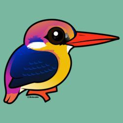 Black-backed Dwarf-Kingfisher