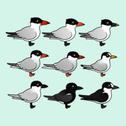 Nine Terns