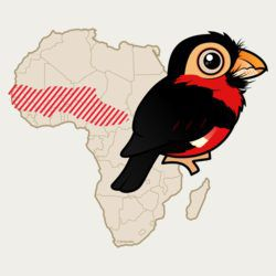 Bearded Barbet Range