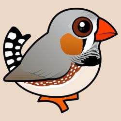 Cute Zebra Finch