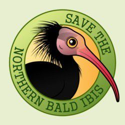 Save the Northern Bald Ibis