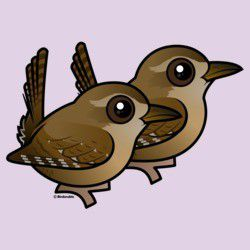 Winter Wren Pair