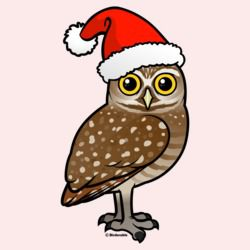Santa Burrowing Owl