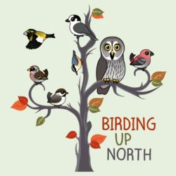 Birding Up North