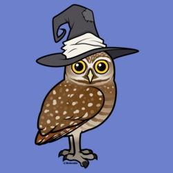 Burrowing Owl Witch
