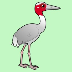 Birdorable Sarus Crane