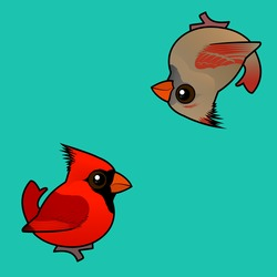 Northern Cardinal Designer Pattern