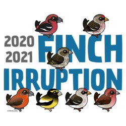 2020-2021 Finch Irruption