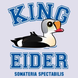 Collegiate King Eider