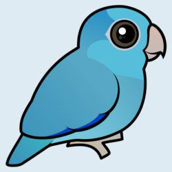 Blue Pacific Parrotlet