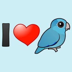 I Love Blue Pacific Parrotlets