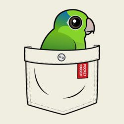 Green Pocket Parrot