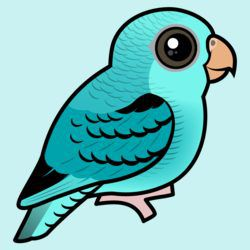 Turquoise Linnie