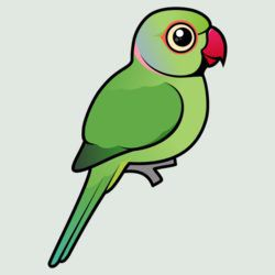 Cute Green Indian Ringneck