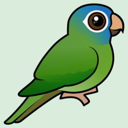 Birdorable Blue-crowned Conure