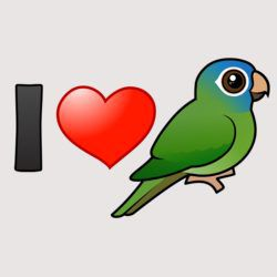 I Love Blue-crowned Conures