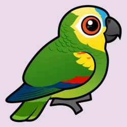 Birdorable-Blue-fronted Parrot