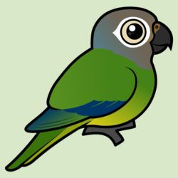 Customizable Dusky-headed Parakeet