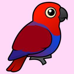 Customizable Female Eclectus Parrot