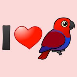 I Love Female Eclectus Parrots