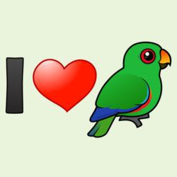 I Love Male Eclectus Parrots