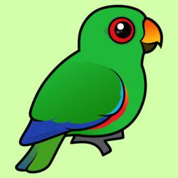 Customizable Male Eclectus Parrot