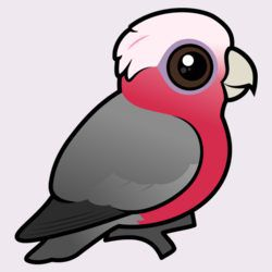 Birdorable Galah (crest down)
