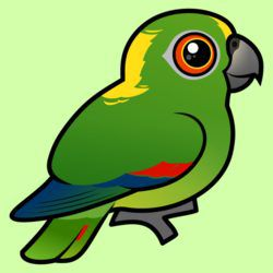 Birdorable Yellow-naped Parrot