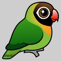 Cute Black-cheeked Lovebird