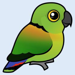 Birdorable Black-collared Lovebird