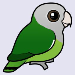 Birdorable Gray-headed Lovebird