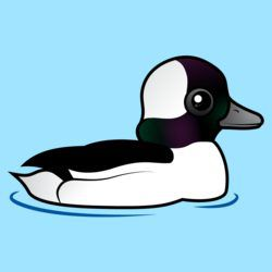 Birdorable Bufflehead