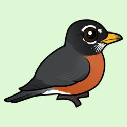 Cartoon American Robin