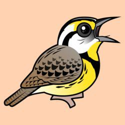 Eastern Meadowlark (singing)
