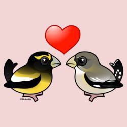 Evening Grosbeaks in love