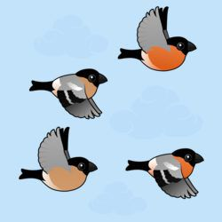 Eurasian Bullfinches in Flight