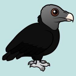 Cute Black Vulture