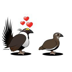 Sage Grouse Love