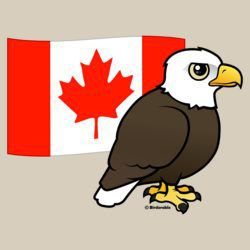 Customizable Bald Eagle Canada Flag