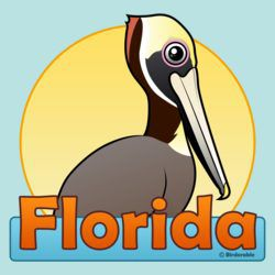 Florida Brown Pelican