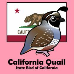State Birdorable of California: California Quail