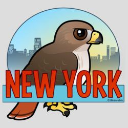 NY Red-Tailed Hawk