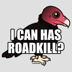 I Can Has Roadkill?