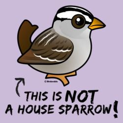 Not a House Sparrow!