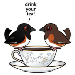 Eastern Towhee: Drink Your Tea!