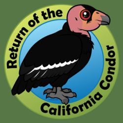 Return of the California Condor
