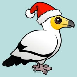 Egyptian Vulture Santa