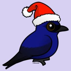 Purple Martin Christmas