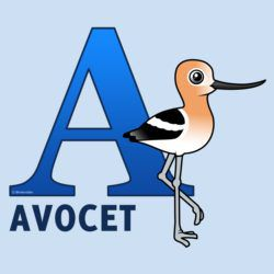 A is for Avocet