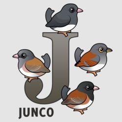 J is for Junco